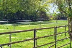 One of the fields at Volker Eubel's riding stable.