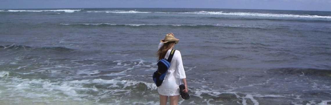 Turtle Bay Surf