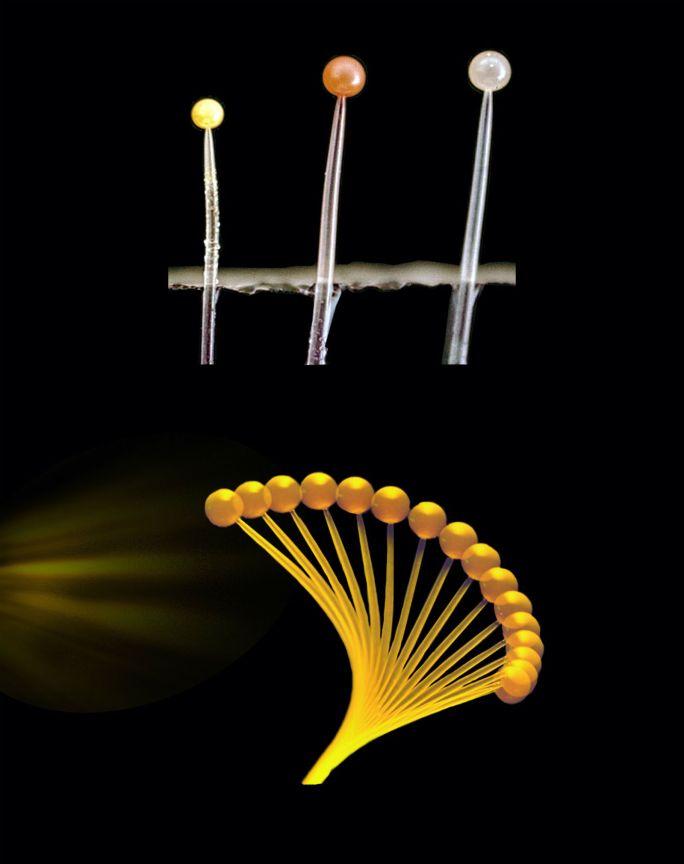 Ilustración de la respuesta del hongo al estímulo lumúnico