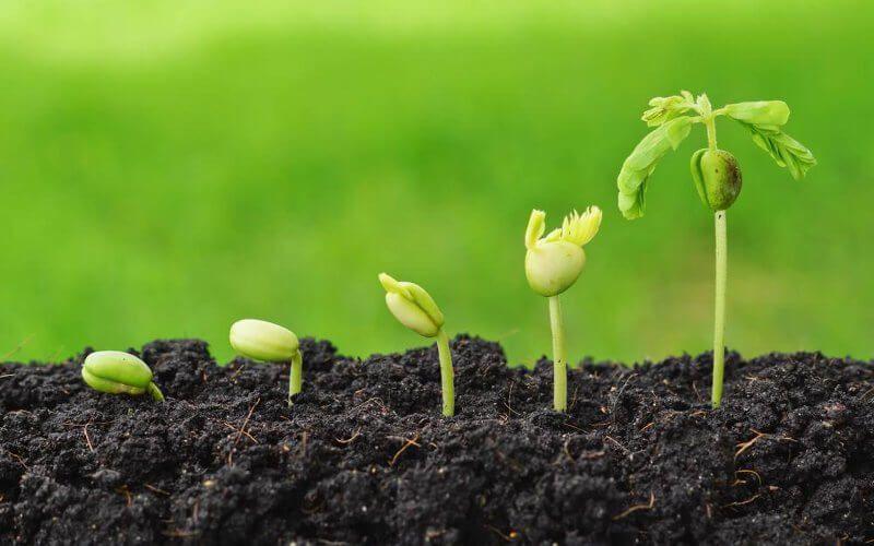 Convocadas subvenciones la ejecución de proyectos innovadores supra-autonómicos en los ámbitos agrarios, agroalimentario, forestal y en el medio rural.