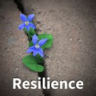 TC 281: Character and Resilience