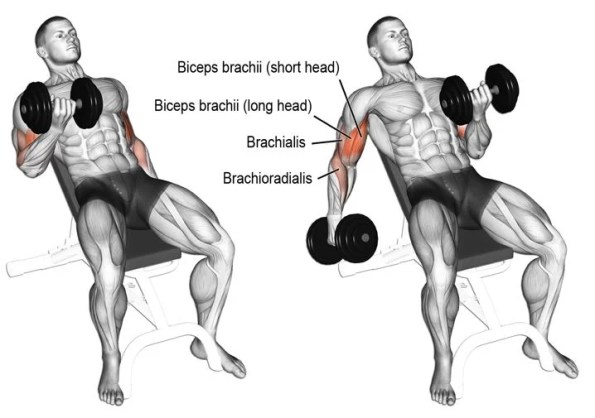curl biceps incliné