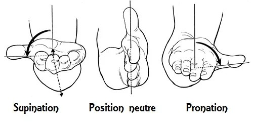 supination neutre pronation