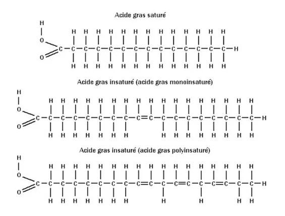 structure moléculaire des acides gras saturés et insaturés