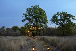 India Pench tree Lodge