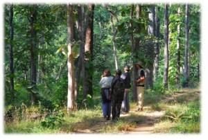 Satpura National Park, Forest Hike