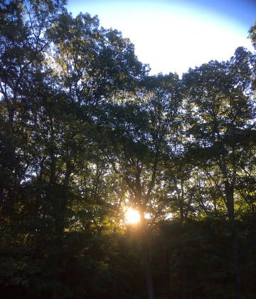 Sunrise through the trees!