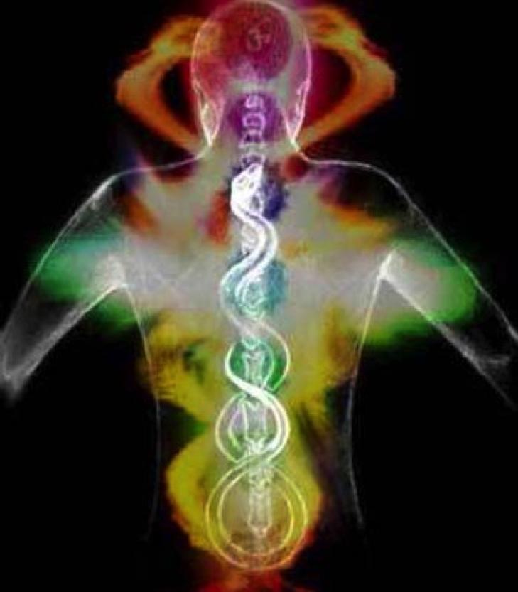 Welle X DNA