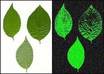 https://i1.wp.com/transinformation.net/wp-content/uploads/2016/01/Biophotonics-the-Science-behind-Energy-Healing-Emission.jpg