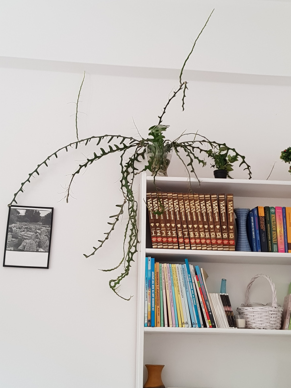 The plant on the bookshelf