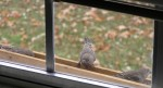 Birds, Finches, at bird feeder outside of window