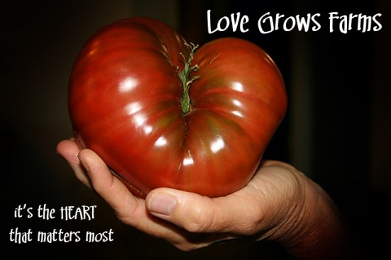 Heart shaped tomato.