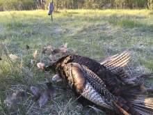 Turkey Hunting With Decoy