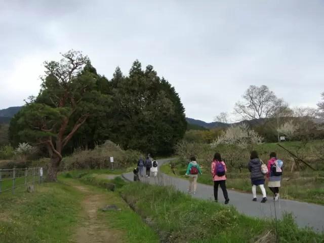 山の辺の道ナンバ歩きの会
