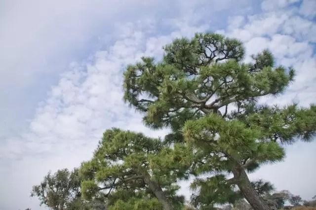 松の木の精霊を産土神界へ返す