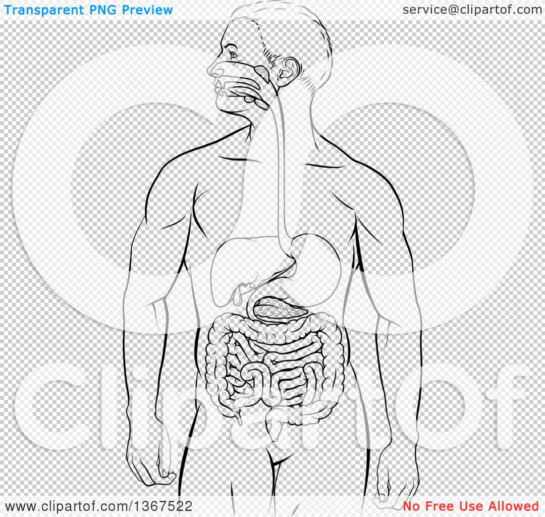 Clipart Of A Black And White Diagram Of A Man S Body With