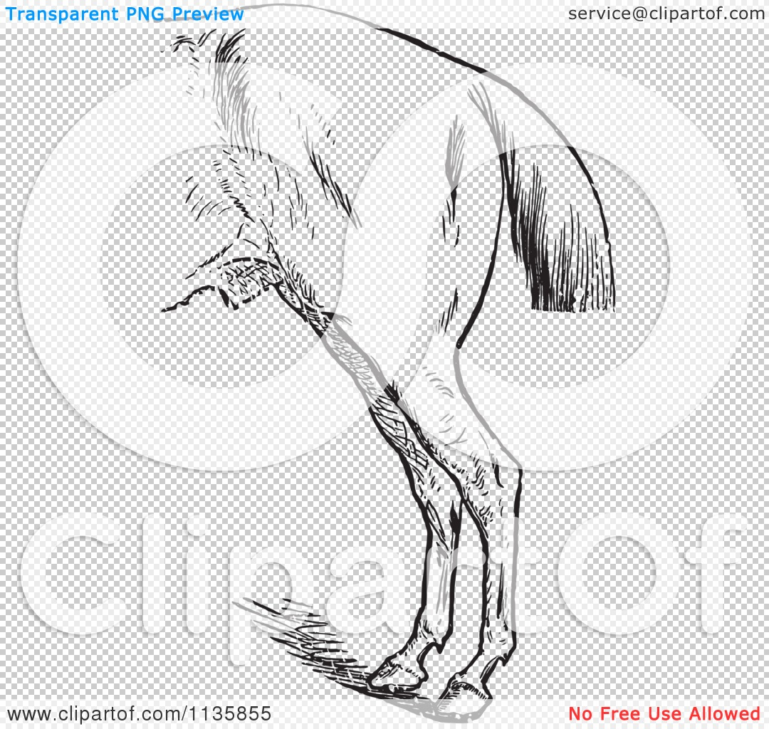 Clipart Of A Retro Vintage Engraved Horse Anatomy Of Bad