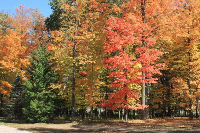 fall leaves at transpharm