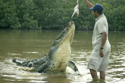 Crocodile Safari Tour River Tarcoles