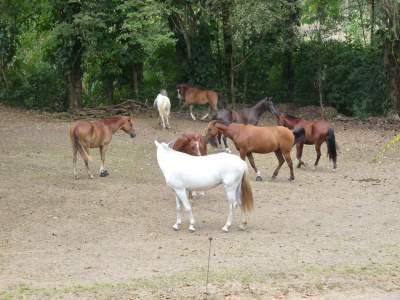 Horse Tour Jaco Beach Los Suenos