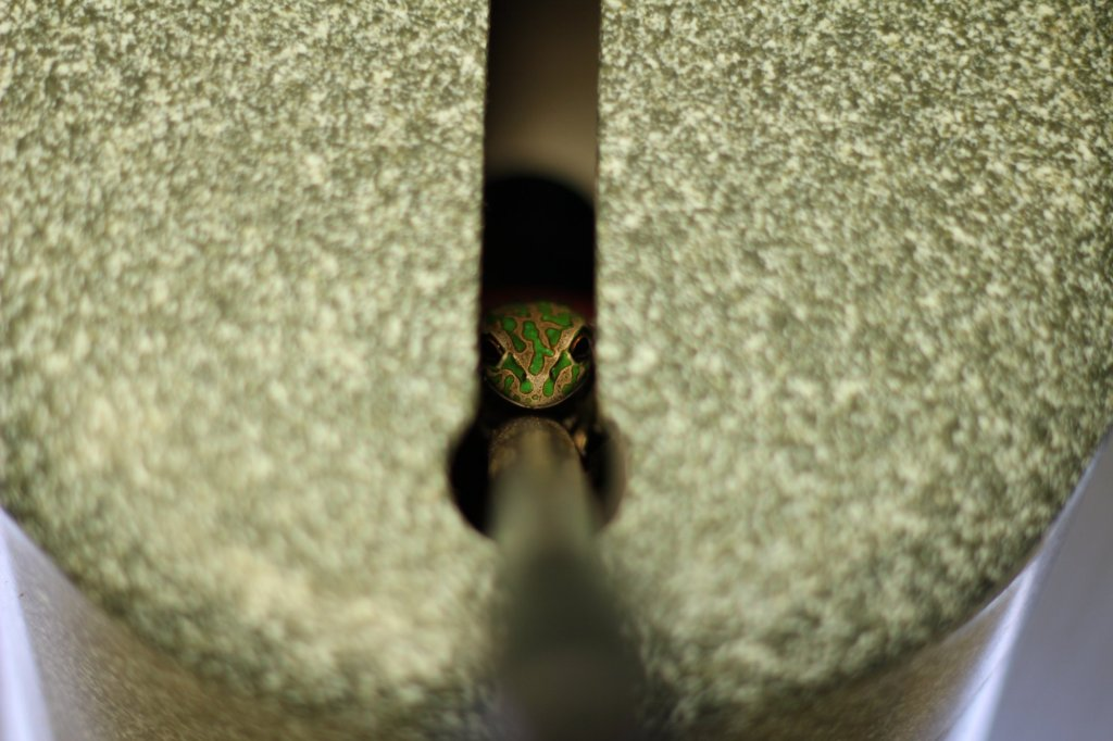 A shy local peeks out from the toilet flusher handle, Stokes National Park, West Australia