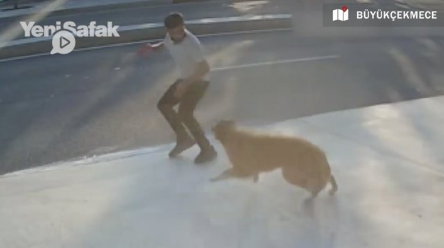 Check this out! Dog Barks At Passerby And Causes Him To Get Hit By A Truck!