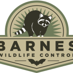 Nuisance Skunk Trapping with Positive Sets – Barnes Wildlife Control