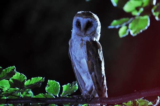 4th owl2