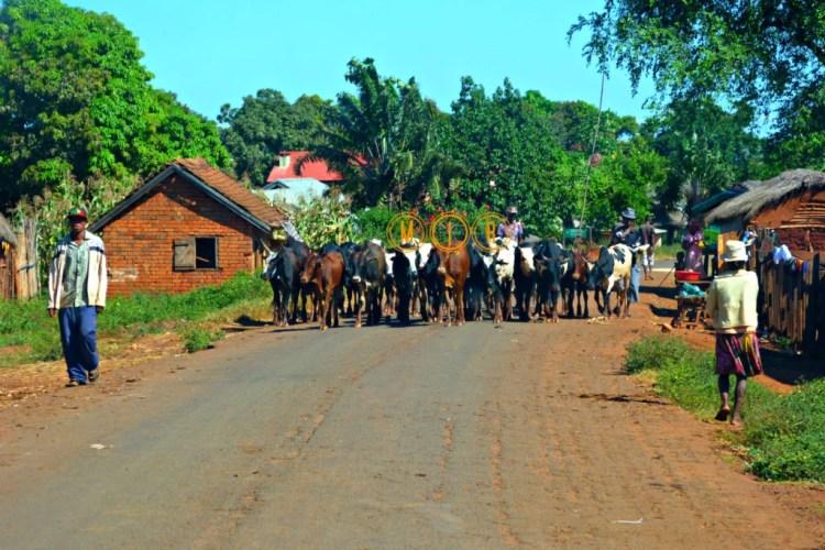 Madagascar en coche