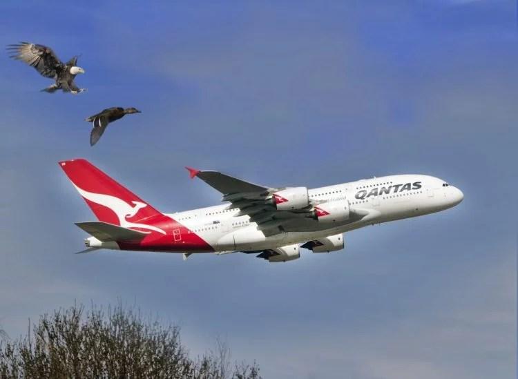 Aves contra aviones