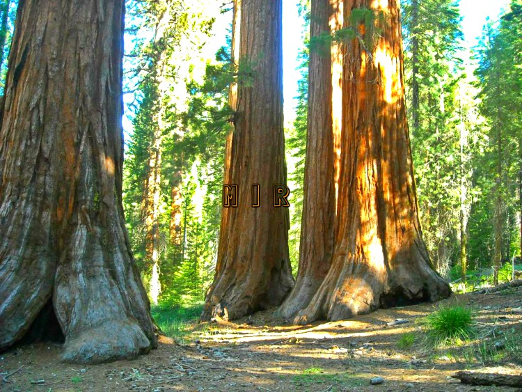 energía de los árboles