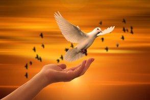 Trauma und Dissoziation - Weiße Taube fliegt von der Hand