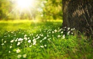 Trauma und Dissoziation - Grüne Wiese mit Baum im Sonnenschein