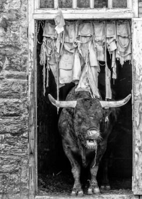 Bull & Denim Jeans