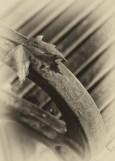 Levee Leaf
