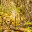outdoorguyphotography-3673
