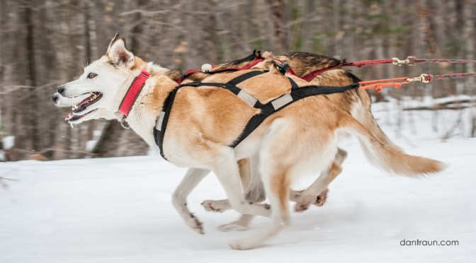 20th Annual Apostle Island Sled Dog Race | #AISDR