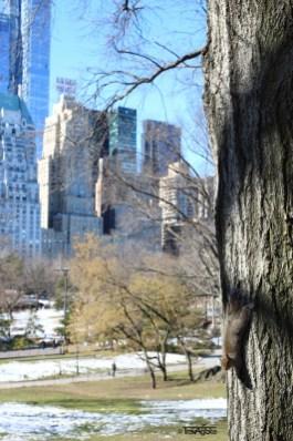 Central Parkt