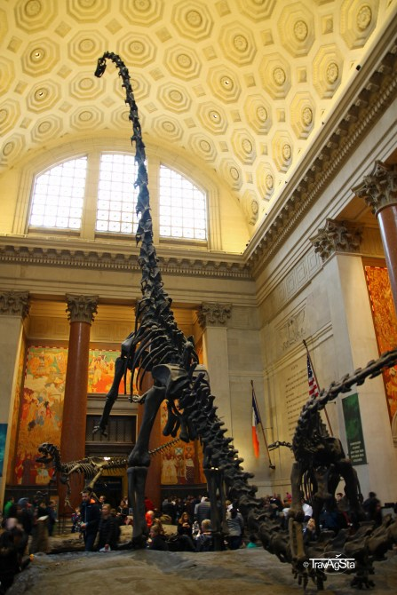 Museum of Natural History (2)t