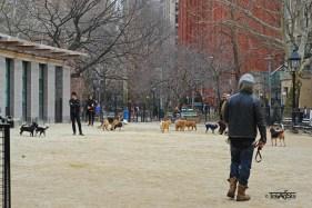 Washington Square Park (2)t