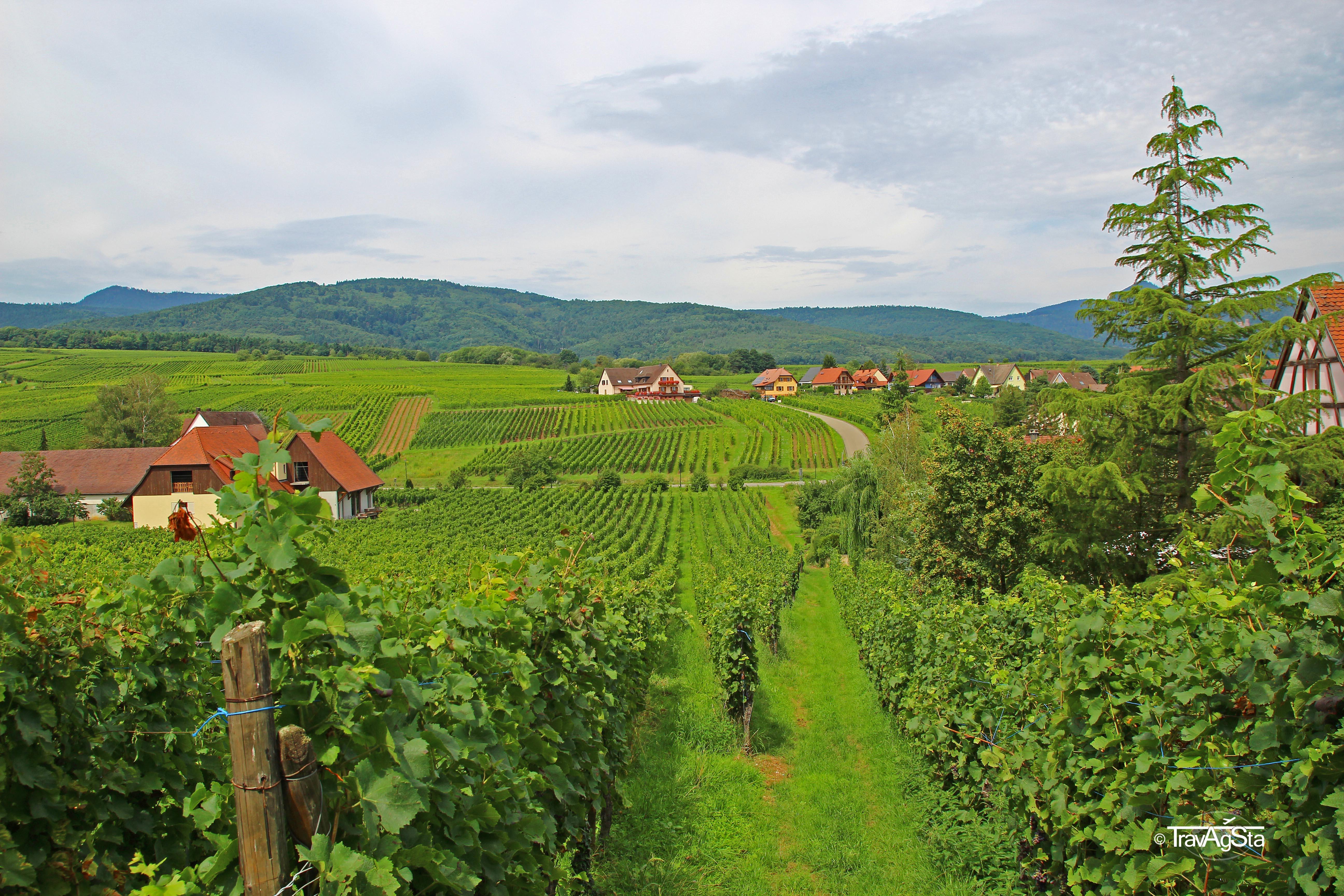 Der Elsass – Mit dem Auto die Weinstraße entlang!