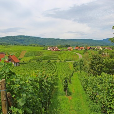 Alsace – Reasonable reasons for this region!