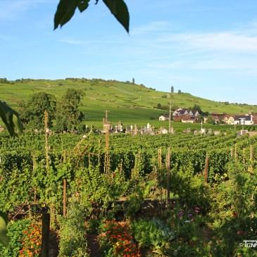 Kientzheim – The sleepiest village in Alsace!