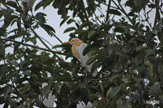 Kokoban Birds, Ubud, Bali, Indonesia