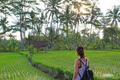Rice Fields, Ubud, Bali, Indonesia