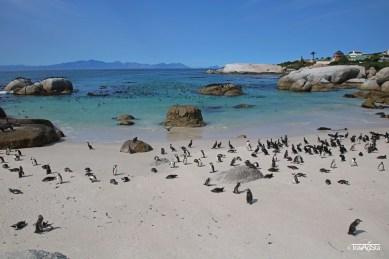 Boulders Beach, South Africa