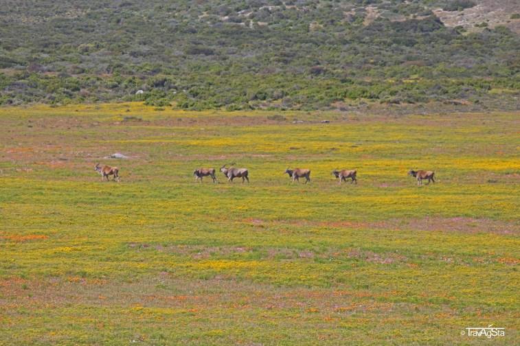 West Coast National Park, South Africa