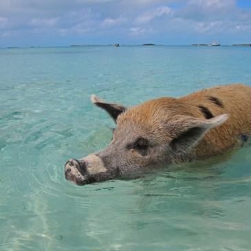 Traumziel Exuma, Bahamas – was ihr vor eurer Reise wissen solltet!