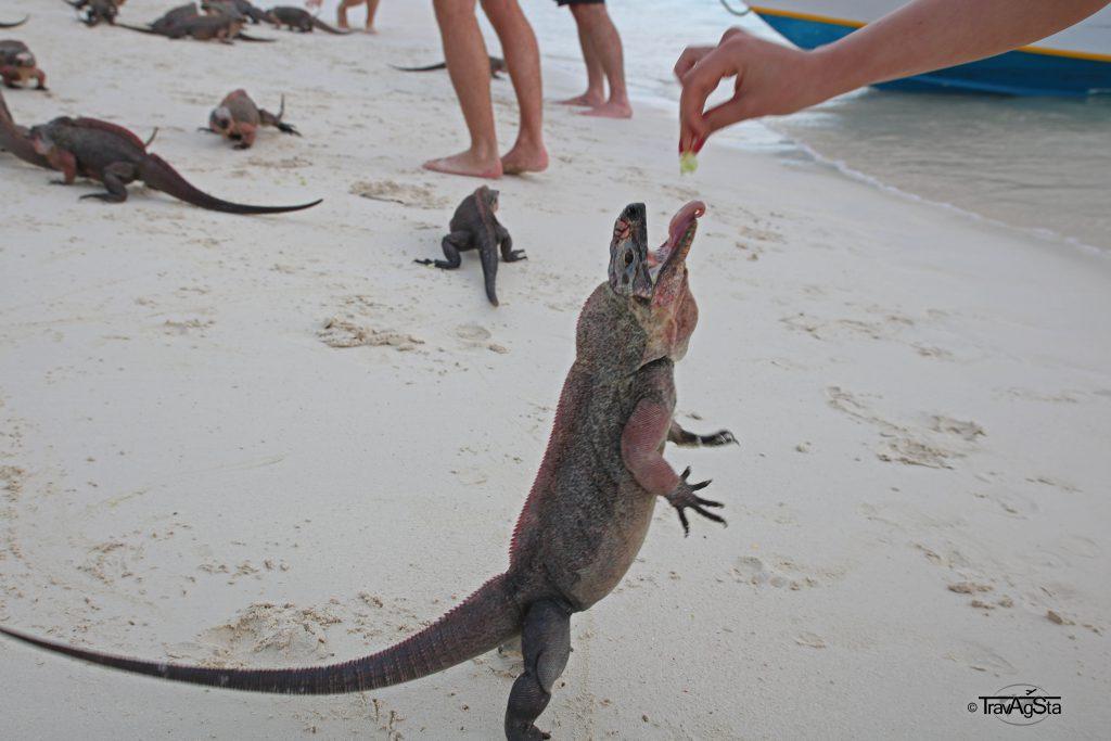 Iguana Bay, Exuma Cays, The Bahamas