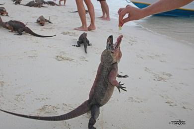 Exuma Cays, The Bahamas